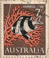 Australia-388-J7