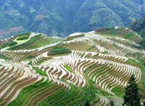 China Longji Rice Terraces