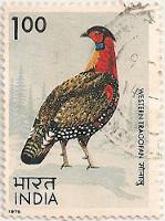 India-765-AH22