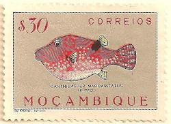 Mozambique-444-AN54
