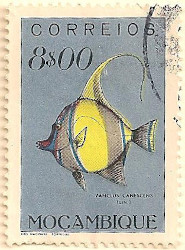 Mozambique-457-AN54