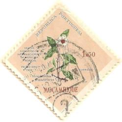 Mozambique-511-AN57