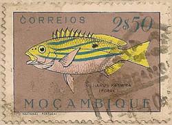 Mozambique-450-J74
