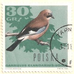 Poland-1699-AK35