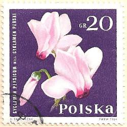 Poland-1528-AN103