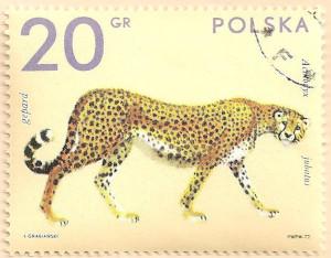 Poland-2147-AN101
