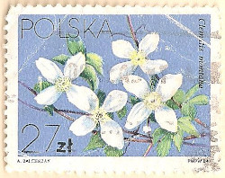 Poland-2926-AN100