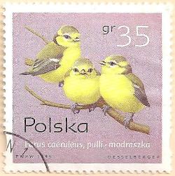 Poland-3594-AN101