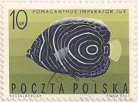 Poland 1728 i25