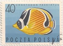 Poland 1729 i90
