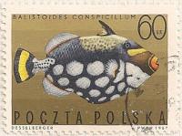 Poland 1730 i25