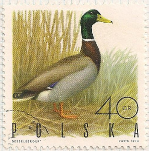 Poland 1968 i100
