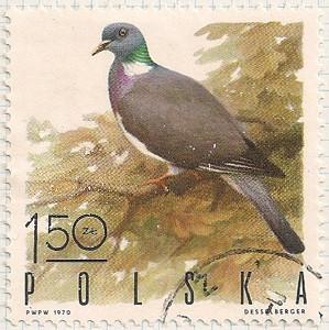 Poland 1972 i100