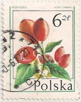 Poland 2480 i27