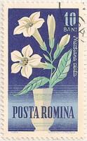 Rumania 3134 i40