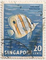 Singapore 71 i51