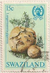 Swaziland 463 i72