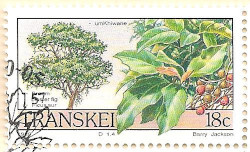 Transkei-241-AN205