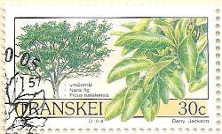 Transkei-242-AN205
