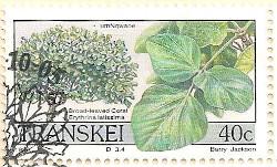 Transkei-243-AN205