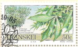 Transkei-244-AN205