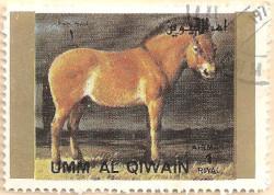 Umm-al-Qiwain-Animals-7-AN210