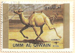 Umm-al-Qiwain-Animals-8-AN210