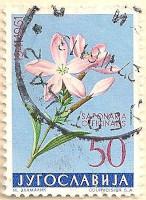 Yugoslavia-1005-AN242