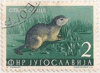 Yugoslavia-765-i85