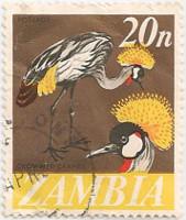 Zambia-136-AF45