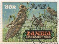 Zambia-175-AF44
