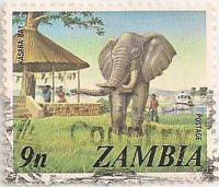 Zambia-232-AF45