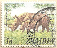 Zambia-226-AN254