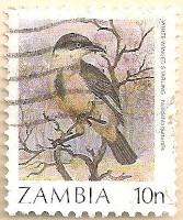 Zambia-485-AN254