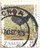 Zambia-487-AN254