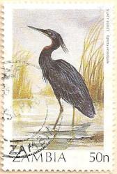 Zambia-491-AN254