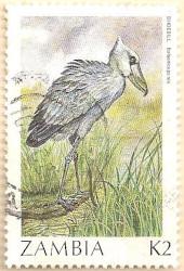 Zambia-499-AN254