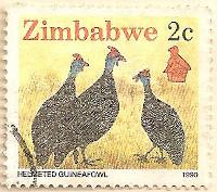 Zimbabwe-769-AN257